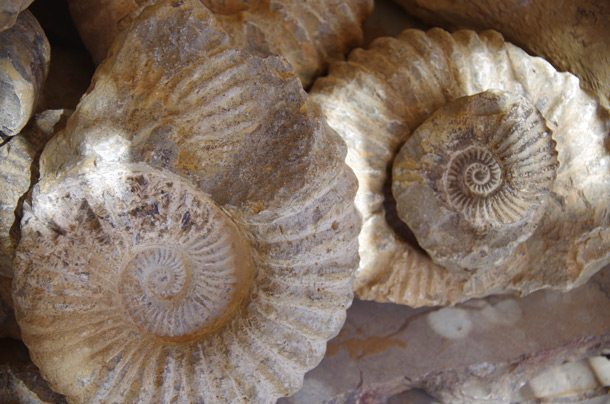 408.-Fossils