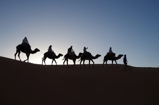 camels in desert silhouette