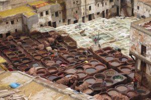 pigeon vats