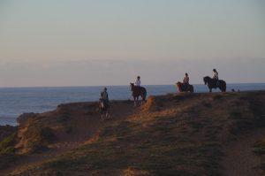 Horses on Oualidia beach
