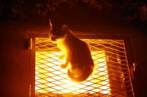 Cat on hot light